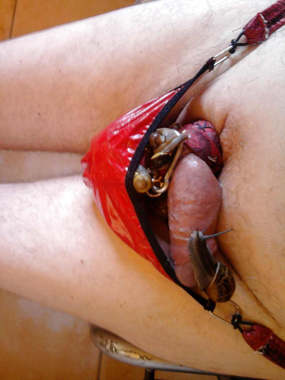 Cock torture insects