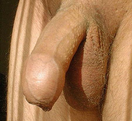 Fetter Schwanz