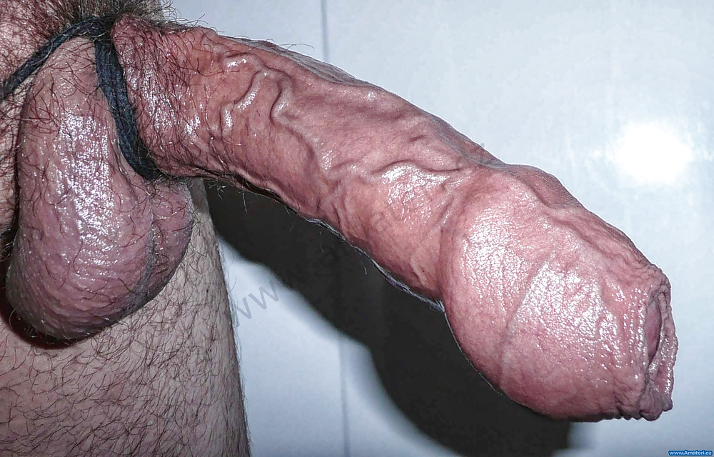 Large penis pic veiny