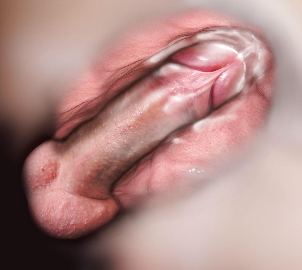 Human Sexual Anatomy Physiology