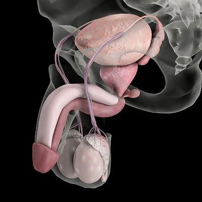 Секс против простатита простатиты у мужчин признаки последствия
